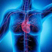 weiblicher Brustkorb Herz-Kreislauf